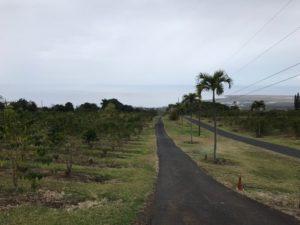 UCCコーヒー 農園