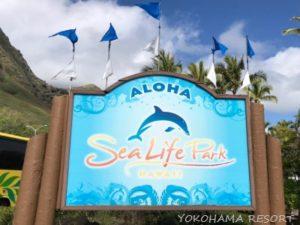 シーライフパーク イルカ 水族館 ハワイ オアフ島