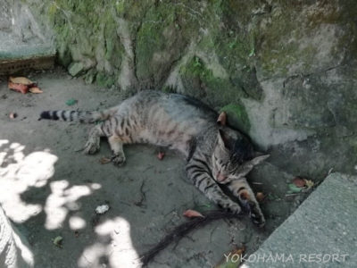 台湾 猫村の猫